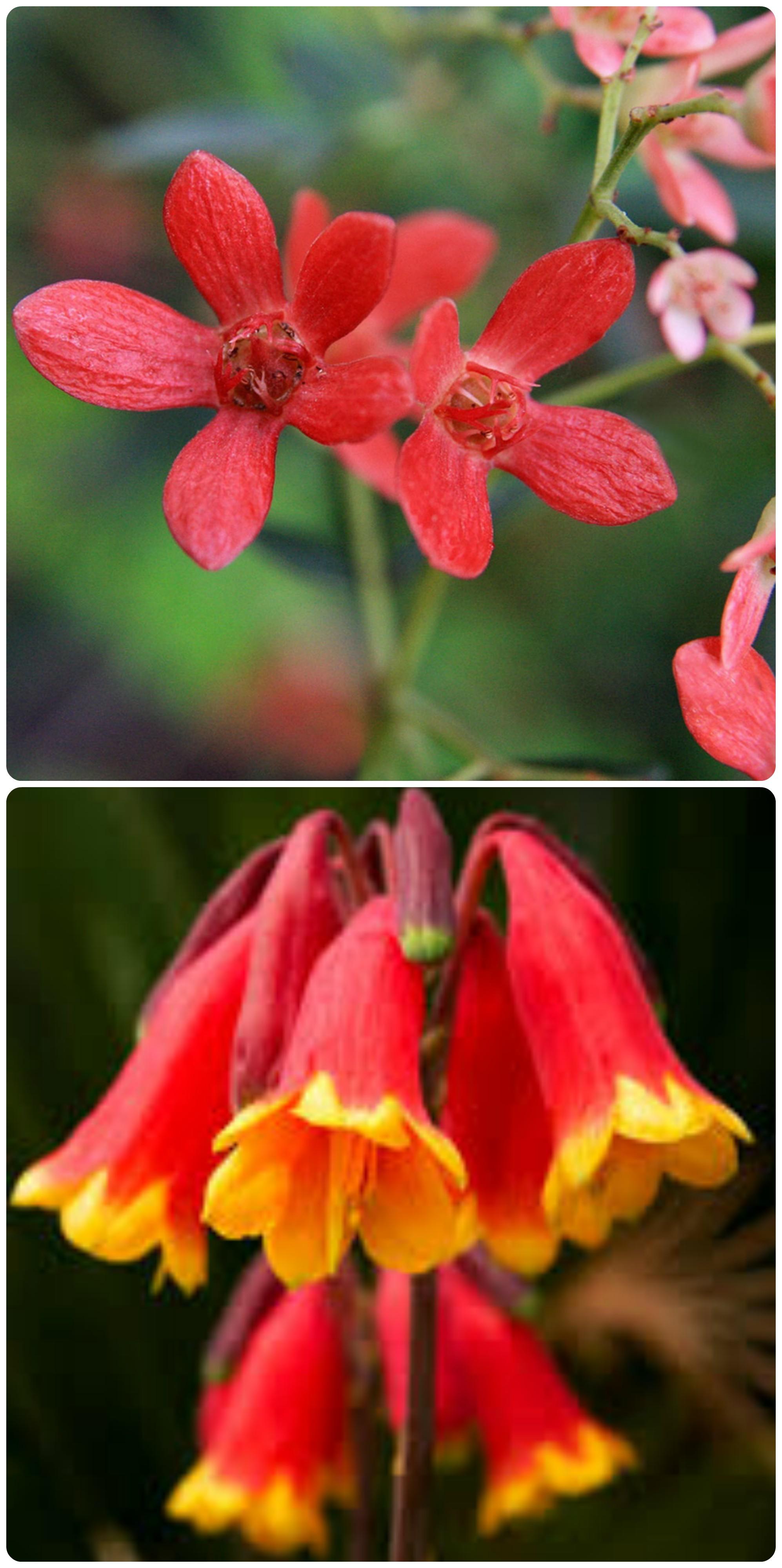 australianflowers
